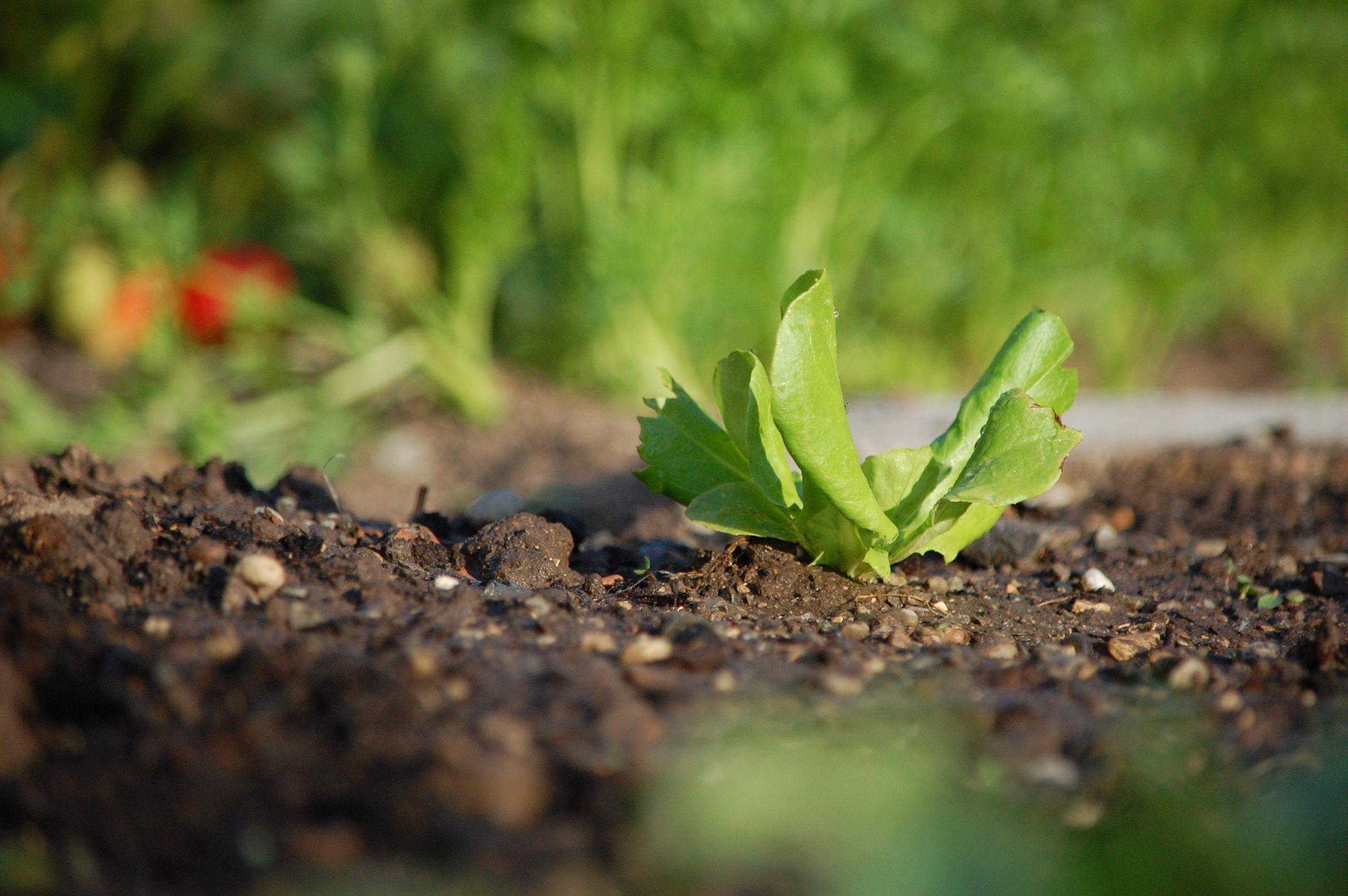 Cultiver bio EHPAD